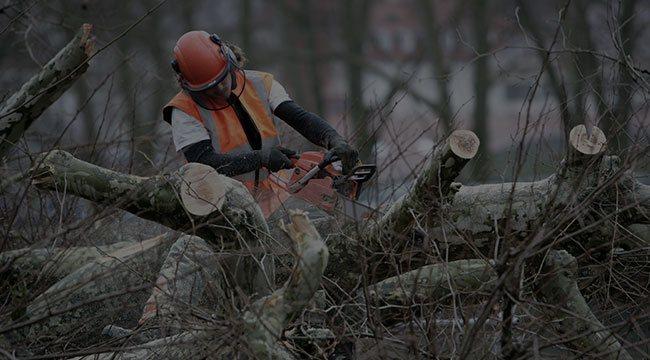 Cedar Tree Service