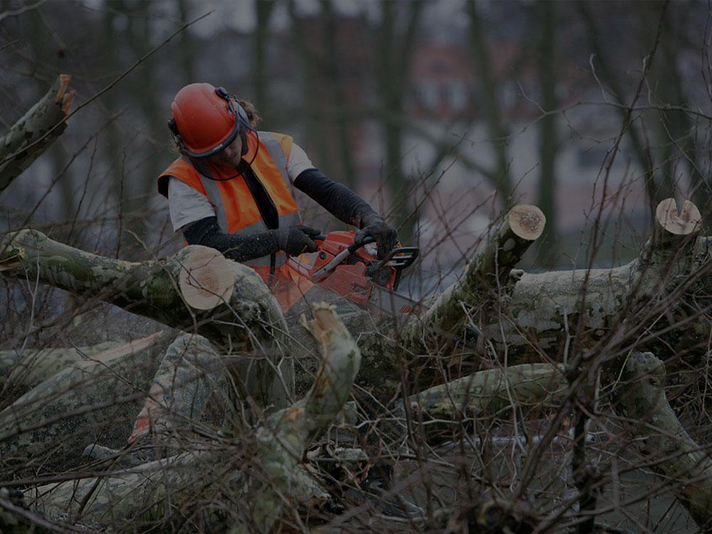 Lantzville Tree Removal